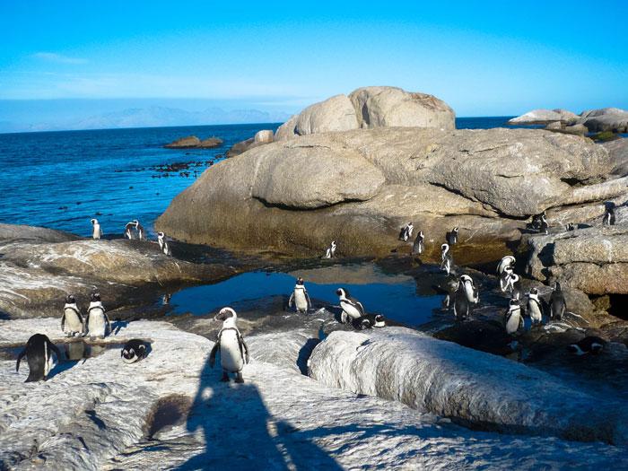 Boulders Beach - Südafrika