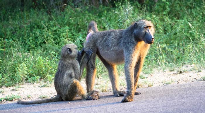Kruger National Park – Südafrika – Reiseziele – Reiseblog Ipackedmybackpack.de