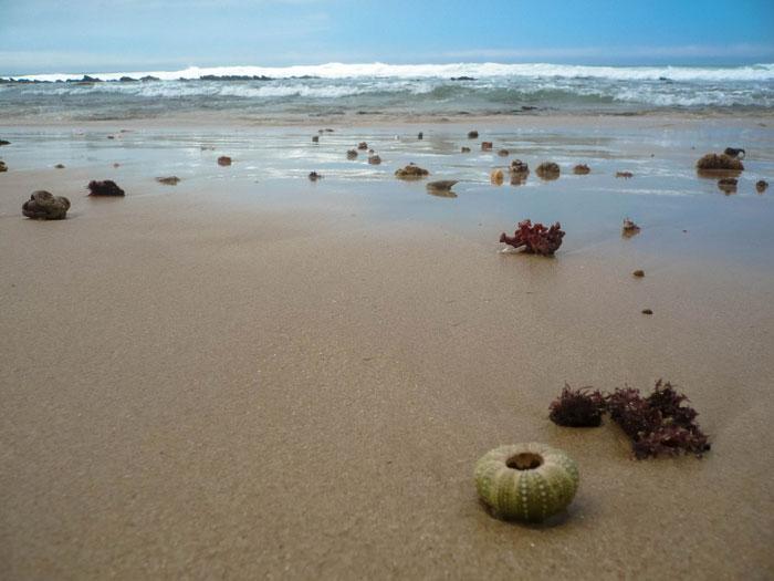 Jeffreys Bay - Südafrika