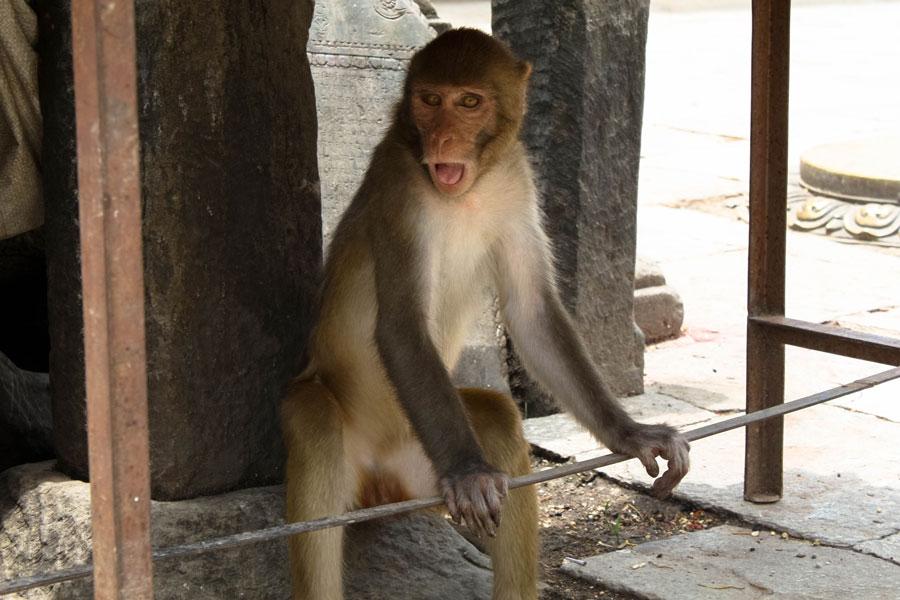 Kathmandu - Indien – Ipackedmybackpack.de Reiseblog