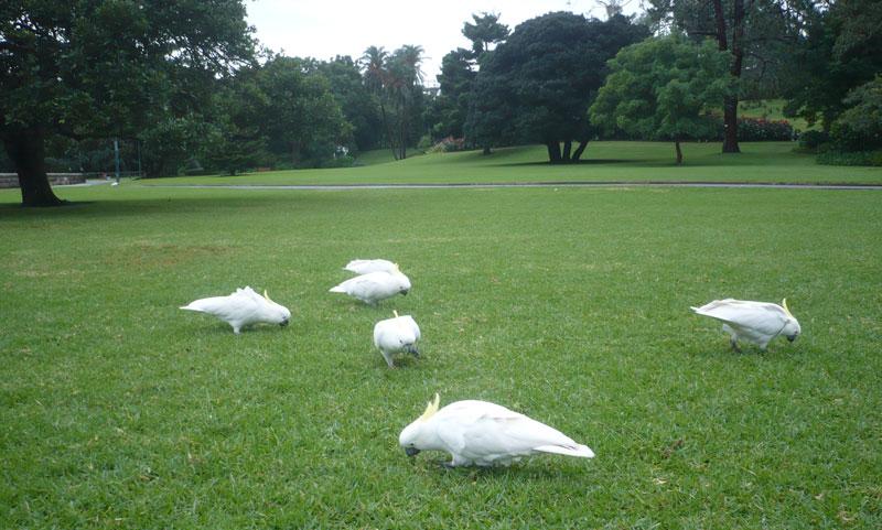 Sydney Royal Botanic Garden - Australien