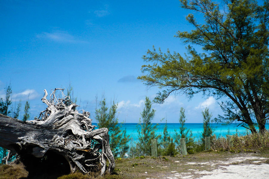 Bimini - Bahamas