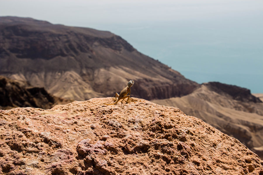 Dead Sea Panorama View Point - Jordanien