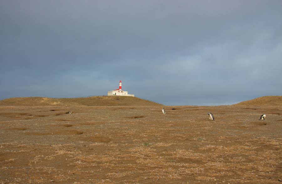 Isla Magdalena - Chile - ipackedmybackpack.de - Reiseblog