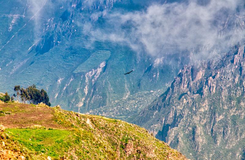 Colca Canyon - Peru - ipackedmybackpack.de - Reiseblog
