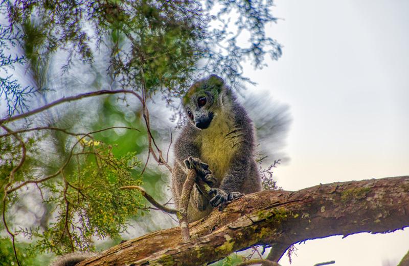 Antsiranana - Madagaskar - ipackedmybackpack.de - Reiseblog
